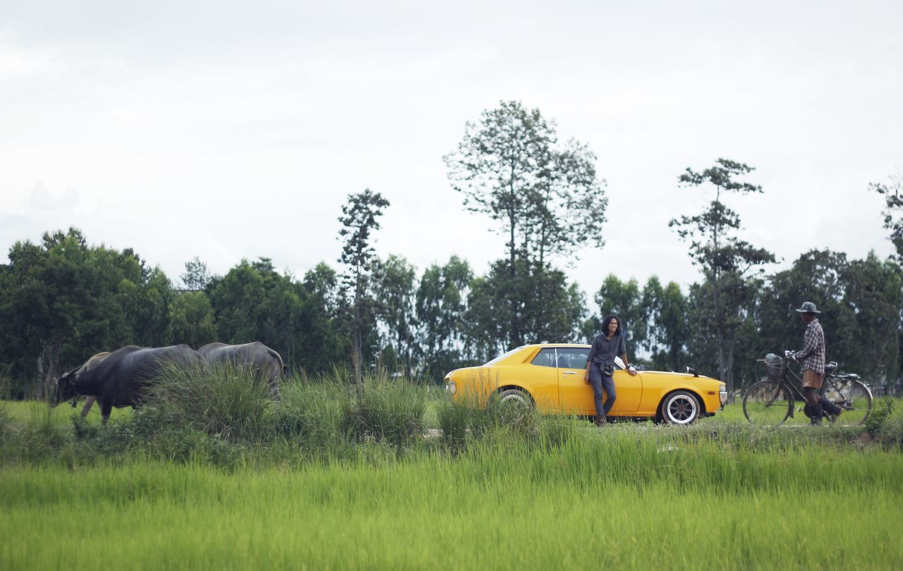 tree, transportation, land vehicle, car, grass, real people, elephant, day, mammal, nature, animal themes, outdoors, sky