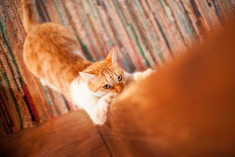 Beam Carpet Cat Cat Attack Cat Scratching Curiosity Domestic Cat A Bird's Eye View 43 Golden Moments EyeEm Cute Cats Eyes Feline Home One Animal Pets Play Time Playful Preparing Scratching Scratching The Surface Selective Focus Time To Play  Whisker Dramatic Angles Wooden Beam Pet Portraits