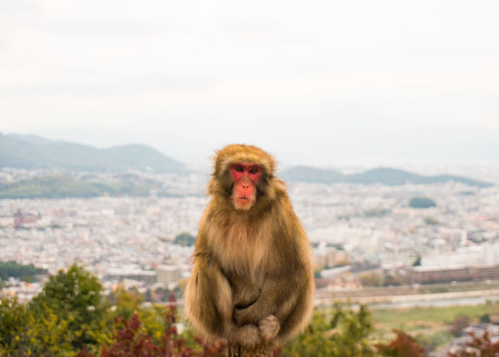 Monkey sitting on wooden post against sky