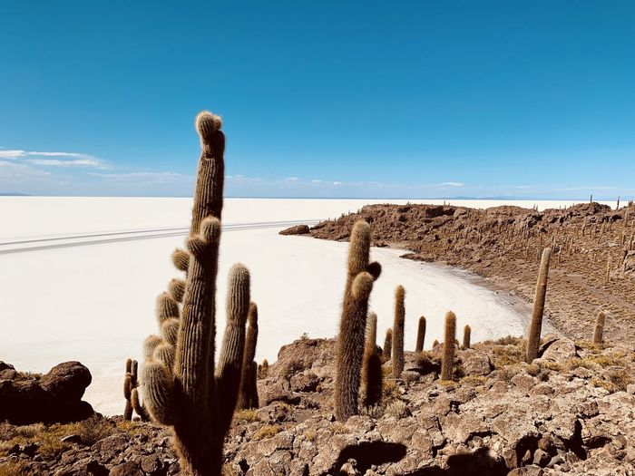 Panoramic view of cactus on land against sky