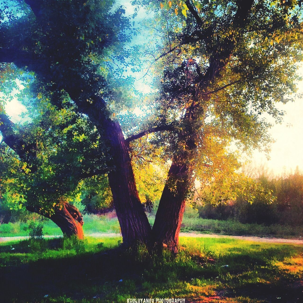 tree, growth, nature, tree trunk, tranquility, beauty in nature, tranquil scene, sunlight, outdoors, landscape, scenics, no people, grass, branch, day, sky