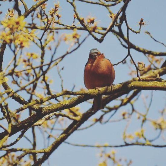 Il y a des centaines d'oiseaux différents dans le parc! J'ai ou en observer quelques un ! Celui la est absolument magnifique ! 🕊 Disneyland Nikon5300 Birds