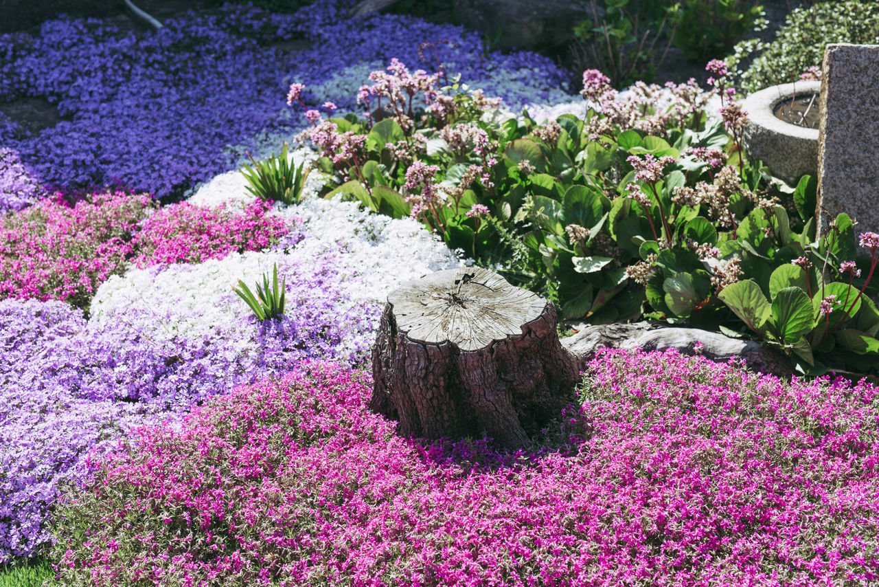 Beauty In Nature,  Day,  Flower,  Flower Head,  Flowering Plant