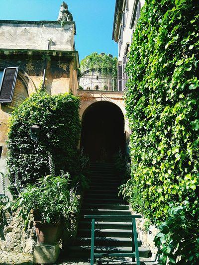Villa Orsini, ancient bear statue and tower Hidden Gems  Hidden Courtyards Rome Through My Eyes Rome Wasn't Built In A Day Taking Photos Colour Your Horizn