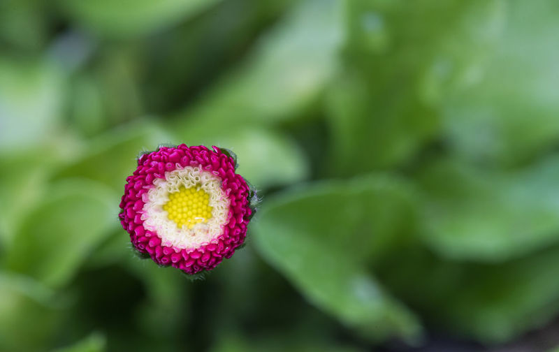 Close-up of pink flower growing on plant