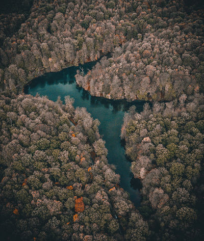Water Beauty In Nature High Angle View No People Tree Scenics - Nature Nature Plant Day Land Outdoors Aerial View River Tranquility Idyllic Tranquil Scene Landscape Growth Brussels Wood Autumn Green Green Color Sonian Forest Autumn Mood