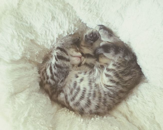 Close-up of kitten sleeping on white bed