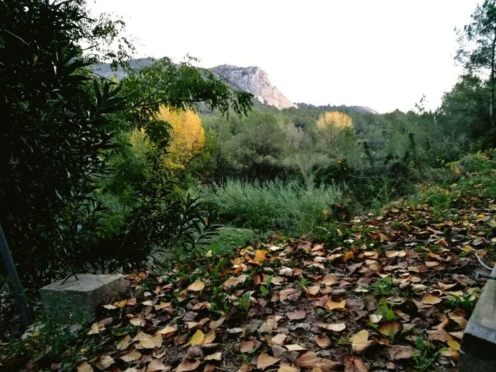 lugares con encanto Aixativa Autumn🍁🍁🍁 Mountain Landscape Nature Outdoors Beauty In Nature