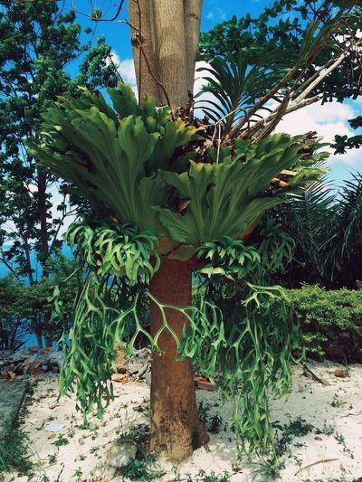 Acid Plants Jungle INDONESIA Fractals