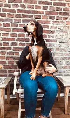 Bono Bracke Hidden Faces One Animal Dog Canine Domestic Pets Domestic Animals Sitting Seat Chair