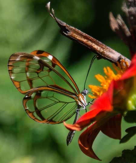Insect Invertebrate Animal Wildlife Animal Wing Animal Themes Animals In The Wild One Animal Flower Beauty In Nature Close-up Plant Animal Flowering Plant Green Color Nature Focus On Foreground Growth No People Fragility Vulnerability