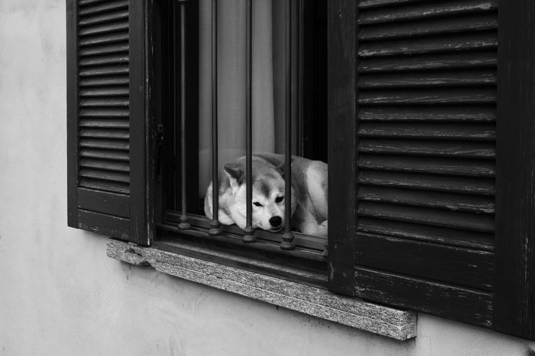 Portrait of a dog laying on a window sill