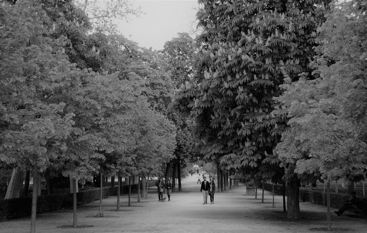 Park Retiro Park Madrid Walking