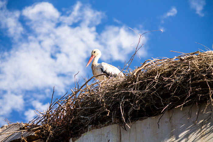 Algarve Adapted To The City Animal Wildlife Animales Animals Animals In The Wild Beauty In Nature Bird Bird Nest Cegonha Cigueña Cigüeñas Cloud - Sky Low Angle View Nest Nido Ninho No People One Animal Portugal Silves Storch Stork Tiere White Stork