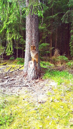 Anyone in the mood for more? Owl Wood Carving Art Wood Carving Wood - Material Wood Bavaria Bavarian Landscape Pegnitz Tree Grass Green Color The Great Outdoors - 2018 EyeEm Awards Green Countryside Dead Tree