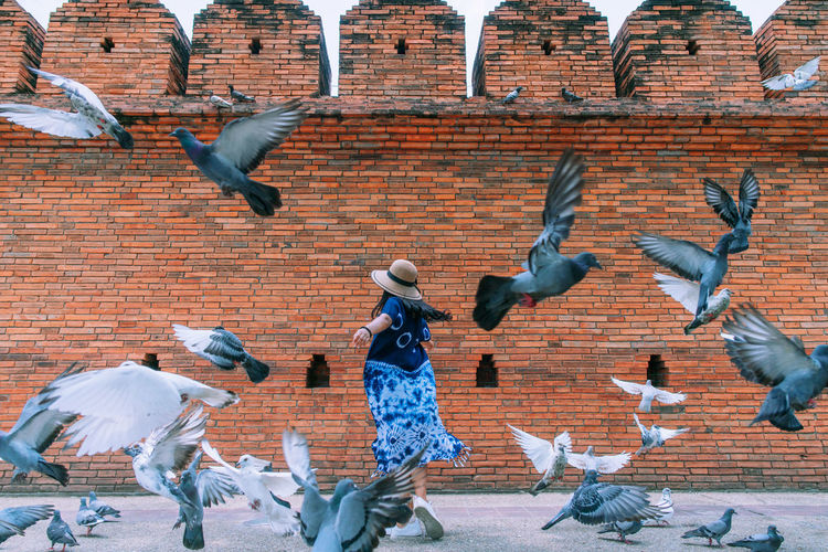 Woman amidst pigeons against brick wall