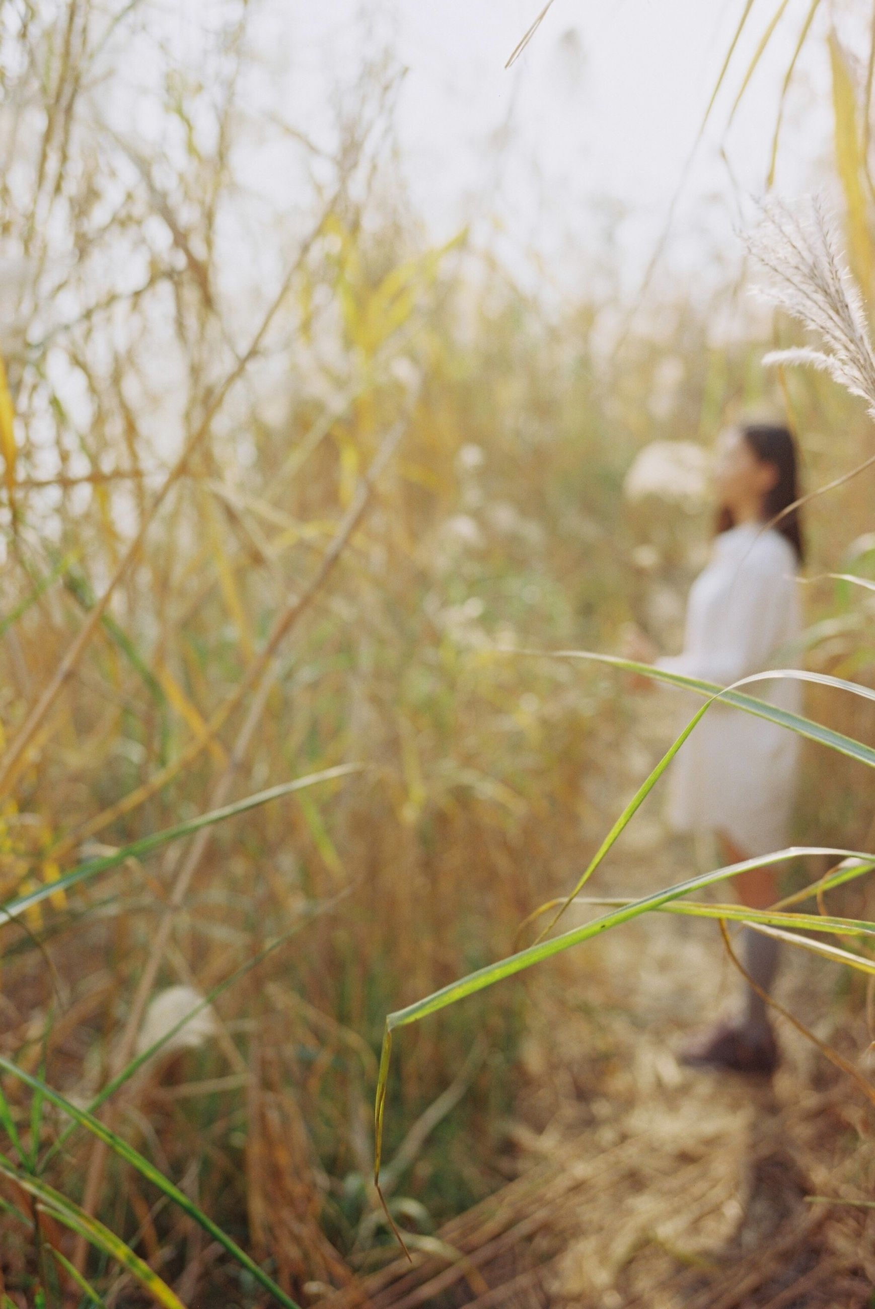 focus on foreground, animal themes, selective focus, one animal, plant, tree, nature, growth, wildlife, day, outdoors, forest, grass, animals in the wild, rear view, close-up, field, tranquility