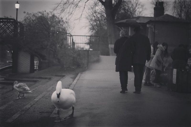 Streetphotography Street Photography Blackandwhite Monochrome