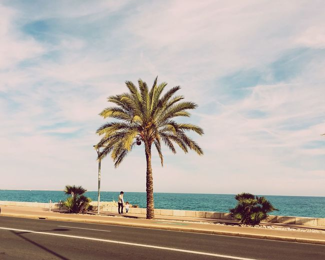 Sea Water Palm Tree Beach Sky Beauty In Nature Nature Horizon Over Water Tree Scenics Real People Cloud - Sky Tranquil Scene Sand Outdoors Day SPAIN Tranquility Nature Nature Photography EyeEm Best Shots EyeEm Nature Lover EyeEm Best Edits Clouds And Sky Blue
