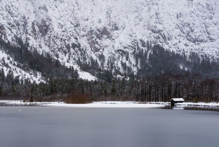 Snow covered plants by lake against mountain