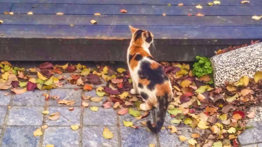 Animal Themes Autumn Change Day Dog Domestic Animals Domestic Cat Fallen Feline Leaf Leaves Mammal Maple Leaf Nature No People One Animal Outdoors Pets Stray Animal