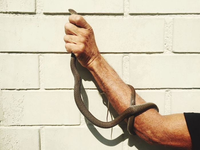 EyeEm Selects Human Hand Human Body Part Wall - Building Feature Real People One Person Human Finger Brick Wall Holding Men Lifestyles Close-up Day Outdoors People Snake EyeEm Ready   EyeEmNewHere