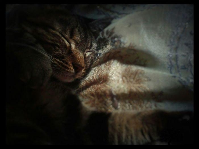 Mycat♥ Lovecats