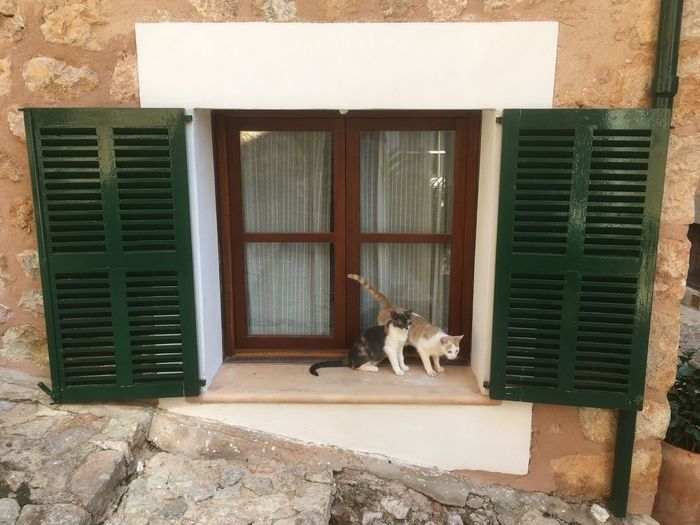 Animal Themes Pets Domestic Animals Architecture Mammal Window Built Structure One Animal House No People Building Exterior Day Domestic Cat Dog Outdoors Holiday EyeEm Gallery No Filter, No Edit, Just Photography