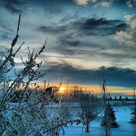 Good Morning from Strathmore - Alberta. Low of -40 this weekend. Strathmore Alberta Explorecanada Explore ColdAsFuck Sunrise Picoftheday Pictureoftheday YYC Ab Explorecanada Adventurecanada Snow Winter Freezing Ruralalberta Beautiful Belowzero