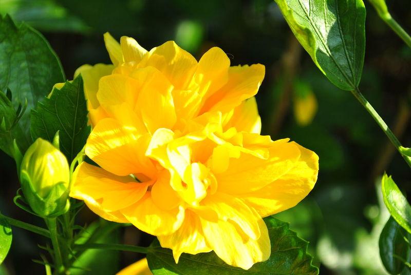 Beauty In Nature Flower Freshness Hoa Nature Softness Yellow 花