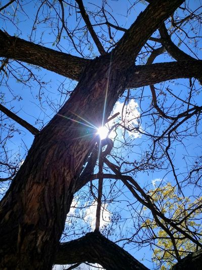 Tree Low Angle View Sky Sunlight Sun Lens Flare Branch Sunbeam Plant Tree Trunk Outdoors Clear Sky Bright Tranquility Trunk Sunny Day No People Brightly Lit A New Beginning