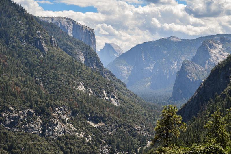 View of the Yosemite valley, California. Amazing Landscape California Half Dome USA Road Trip Usa National Parks Yosemite Yosemite National Park Beauty In Nature California Landscapes Day El Capitan Yosemite Forest Iconic Landmark Iconic Landscape Landscape Mountain Nature No People Outdoors Sky Tree Valley Yosemite National Park, California Yosemite Valley