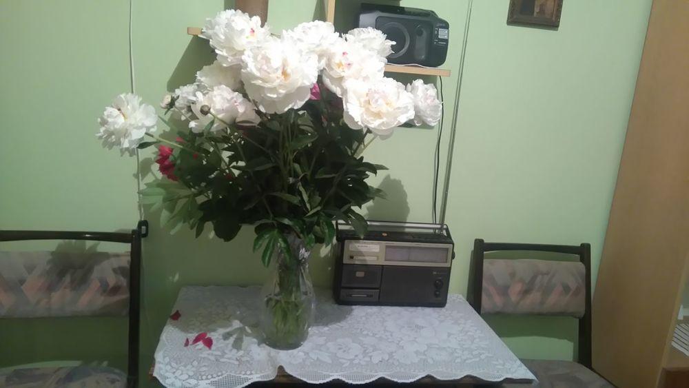 Flowers Kwiaty Piwonie Peony  Radio Old Table The Essence Of Summer