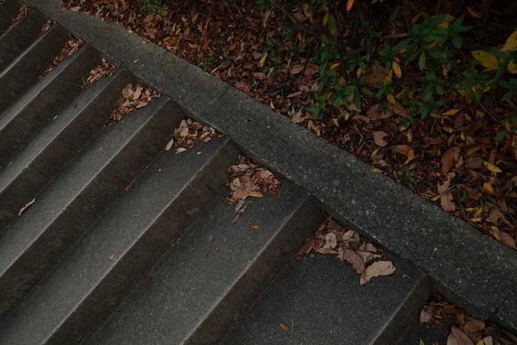 High angle view of fallen leaves in park