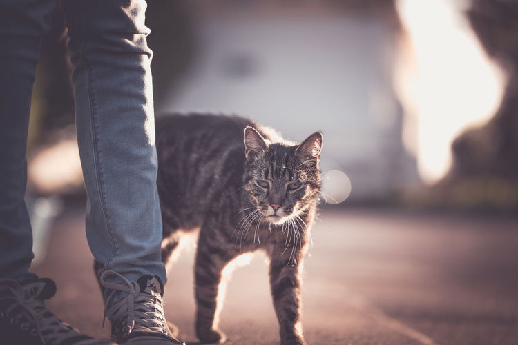 Took this on my todays photowalk Body Part Cat Domestic Domestic Animals Domestic Cat Feline Focus On Foreground Human Body Part Human Leg Jeans Low Section Mammal One Animal One Person Pet Owner Pets Real People Standing Vertebrate Whisker