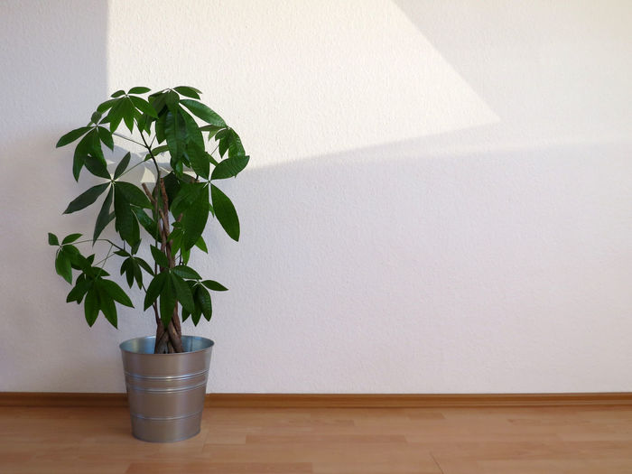 Potted plant at home
