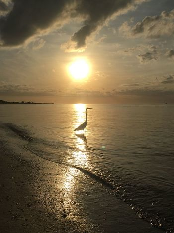 Sunset Sea Water Reflection Sun Nature Scenics Beauty In Nature Beach Silhouette Sky Sunlight Tranquility Cloud - Sky Real People Sand Wave Horizon Over Water Tranquil Scene Outdoors