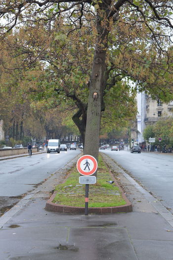 Road sign by trees in city