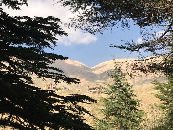 Oksk Photopackers 백향목 Cedars Of Lebanon  Cedar Tree Plant Sky Cloud - Sky Nature Beauty In Nature Mountain