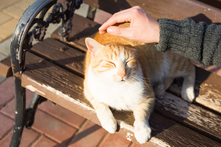 Midsection of woman with cat on bench
