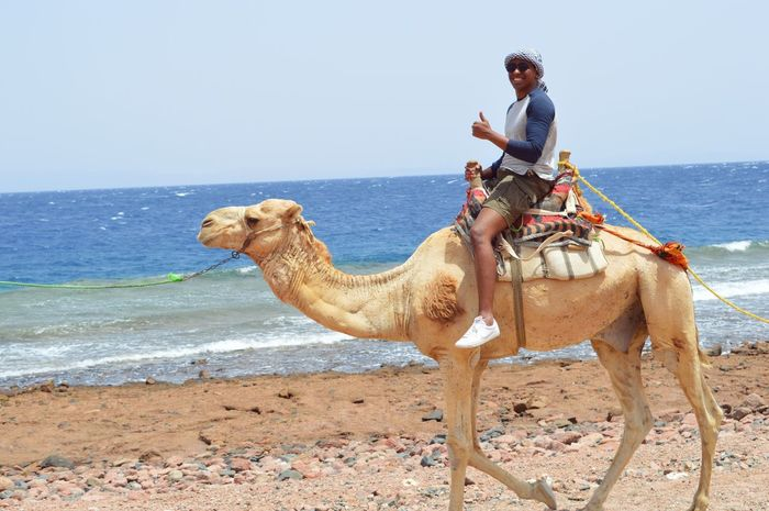 Egypt ❤️ Egypt Sharm El-Sheikh Camel Sea Vacation Enjoying Life Taking Photos Feeling Good Eritrean Trip Cheese!