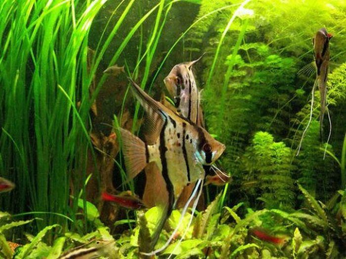 Acuario Aquarium