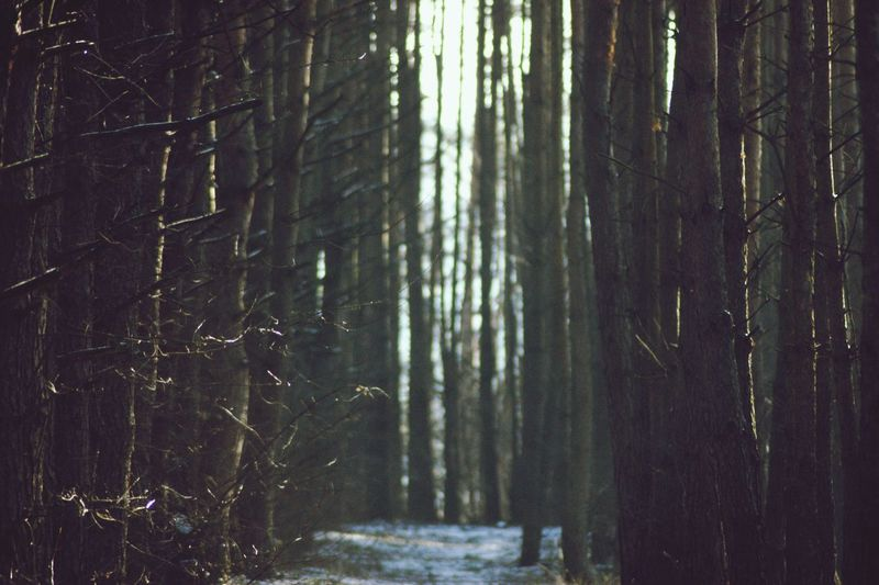 Tunnel Nature darkness and light Path Pathway Tree Forest Tree Trunk Close-up Pine Woodland Pine Tree Evergreen Tree Pine Wood WoodLand