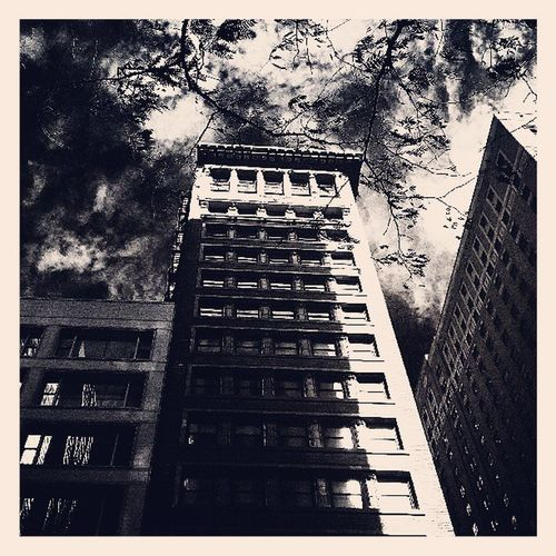Tree Tweegram Photooftheday Building amazing followme follow4follow like4like look instalike igers picoftheday bw instadaily instafollow like chicago iphoneonly instagood bestoftheday instacool instago all_shots follow webstagram colorful style swag