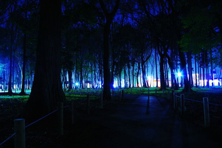 Perspectives On Nature Tree Night Landscape Outdoors Nature Scenics No People Beauty In Nature