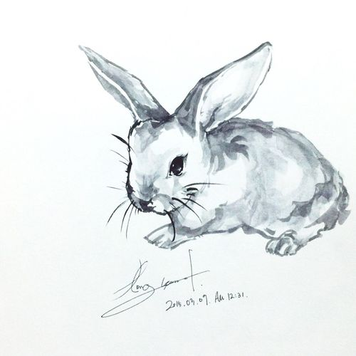 Art Drawing Draw Sketch Rabbit Animals Cute Animals Hobby You I Love You !