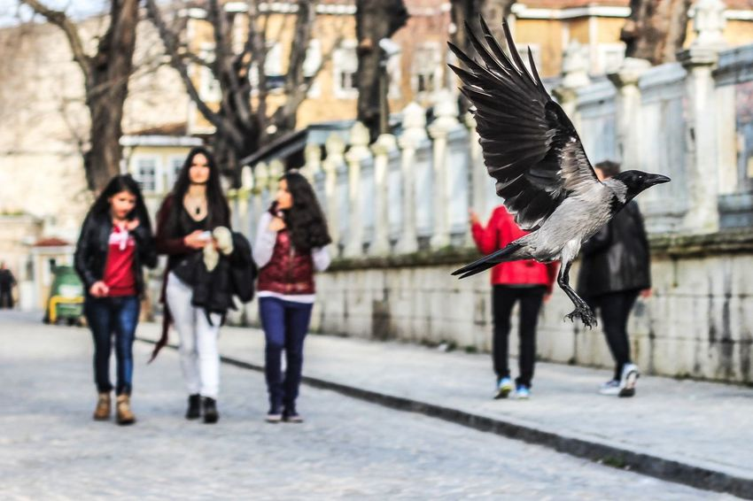 The Week On EyeEm City Life Focus On Foreground Spread Wings EyeEm Nature Lover The Street Photographer - 2017 EyeEm Awards Eye Em Nature Lover Nature Crow Photooftheday Bird Full Length Outdoors