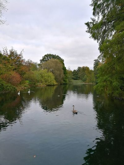 Kew Gardens Autumn Day Grey Day Reflections In The Water Water Animal Wildlife Reflection Tree Lake Nature Bird Day Outdoors