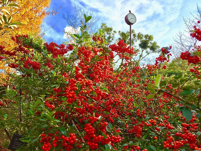 Growth Low Angle View Tree Nature Red No People Sky Outdoors Day Beauty In Nature Cloud - Sky Flower Plant Branch Freshness