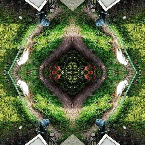 Intrigato dall'effetto tetralgico di una memoria spezzata Art Green Nature Animal Design New Epic Piscio Architecture Rock Metal